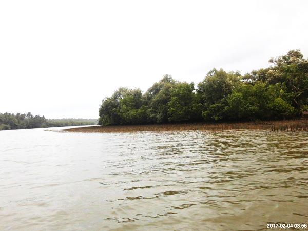 Tago estuary